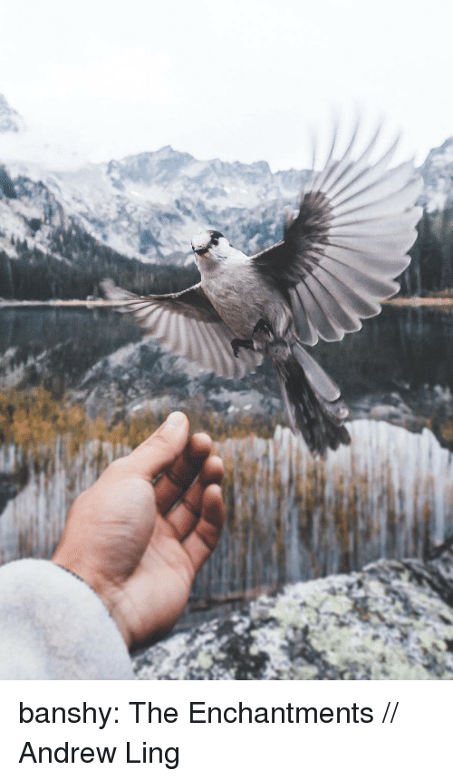 Instagram, Tumblr, and Blog: banshy: The Enchantments // Andrew Ling