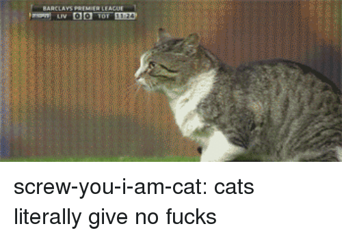 Cats, Tumblr, and Blog: BARCLAVS PREMIER LEADUE screw-you-i-am-cat: cats literally give no fucks