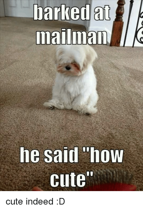 """Cute, Memes, and Indeed: barked at  mailmam  he said """"how  cute"""" cute indeed :D"""