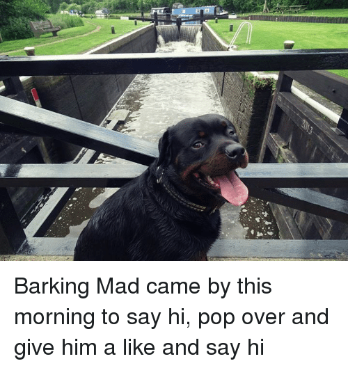 Memes Pop And Mad Barking Mad Came By This Morning To Say Hi