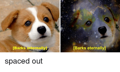 Spaced, Internally, and  Spaced Out: [Barks internally]  [Barks eternally] spaced out