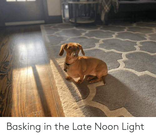 Light,  Late, and The: Basking in the Late Noon Light