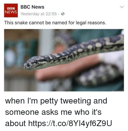 News, Petty, and Bbc News: BBC News  BBC  NEWS  Yesterday at 22:55  This snake cannot be named for legal reasons. when I'm petty tweeting and someone asks me who it's about https://t.co/8YI4yf6Z9U