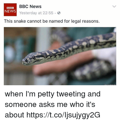 Funny, News, and Petty: BBC News  BBC  NEWS  Yesterday at 22:55  This snake cannot be named for legal reasons. when I'm petty tweeting and someone asks me who it's about https://t.co/Ijsujygy2G