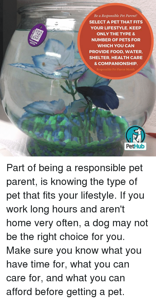 Food, Memes, and Work: Be a Responsible Pet Parent!  SELECT A PET THAT FITS  YOUR LIFESTYLE. KEEP  ONLY THE TYPE &  NUMBER OF PETS FOR  WHICH YOU CAN  PROVIDE FOOD, WATER,  SHELTER, HEALTH CARE  & COMPANIONSHIP.  Responsible Pet Parent Month  PetHub Part of being a responsible pet parent, is knowing the type of pet that fits your lifestyle. If you work long hours and aren't home very often, a dog may not be the right choice for you. Make sure you know what you have time for, what you can care for, and what you can afford before getting a pet.