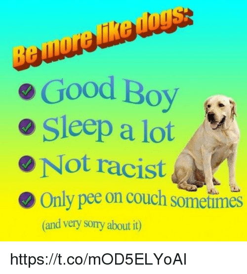 Memes, Sorry, and Couch: Be  Good Boy  o Sleep a lot  Not racist  Only pee on couch sometimes  (and very sorry about it) https://t.co/mOD5ELYoAI