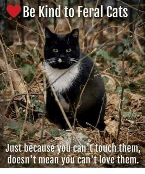 Cats, Memes, and Mean: Be Kind to Feral Cats  Just because you can touch them  doesn't mean you can'tlove them