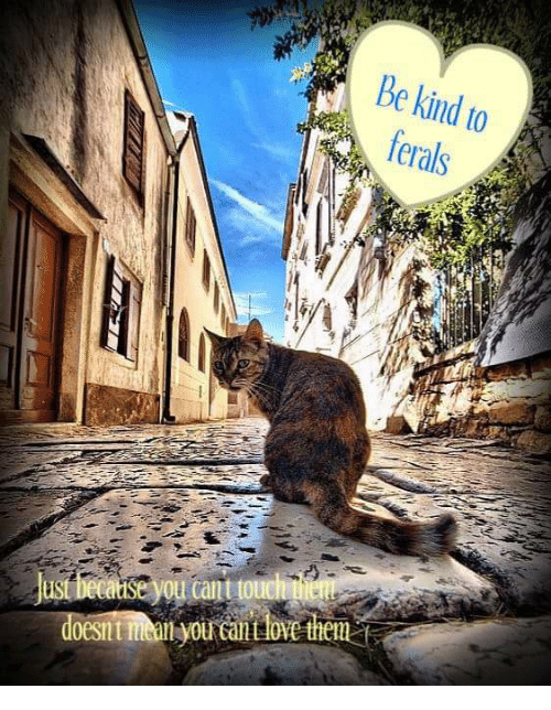 Love, Memes, and Kindness: Be kind to  ferals  's,ジー  doesn t niallyou call Love them  rantlovethems