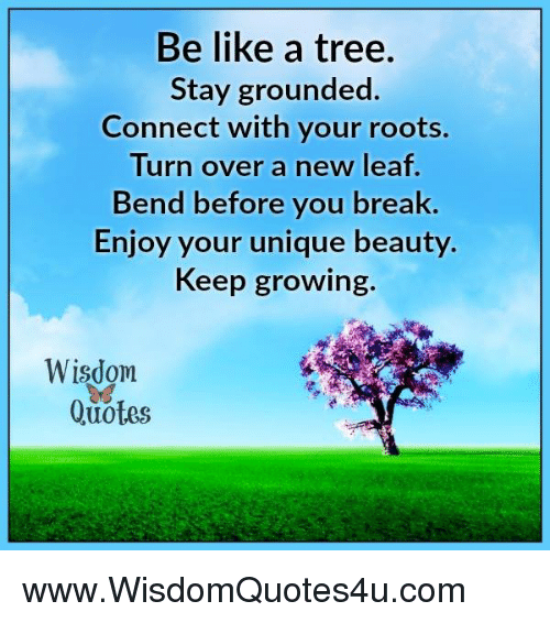 Be Like A Tree Stay Grounded Connect With Your Roots Turn Over A New