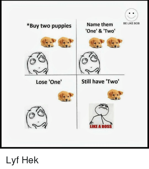 Be Like, Puppies, and B0ss: BE LIKE BOB  *Buy two puppies  Name them  One' & Two  Lose 'One  Still have 'Two  LIKE A B0SS