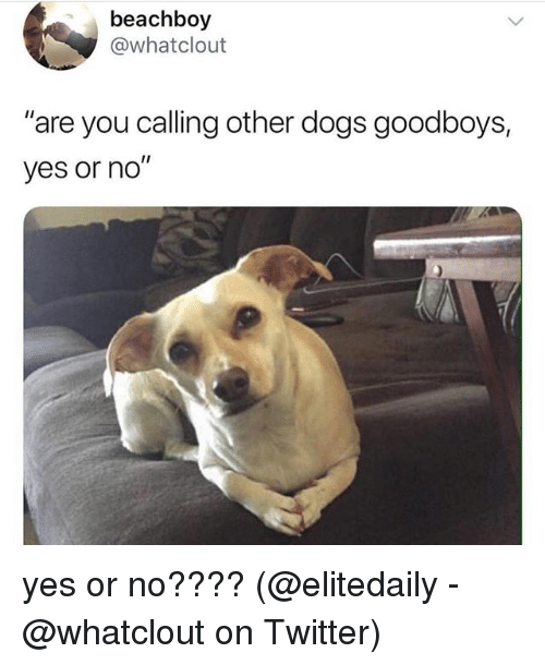 "Dogs, Memes, and Twitter: beachboy  @whatclout  ""are you calling other dogs goodboys,  yes or no"" yes or no???? (@elitedaily - @whatclout on Twitter)"