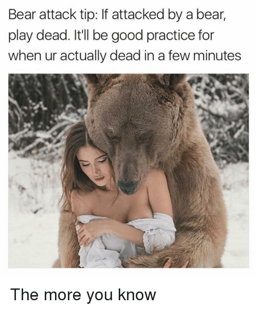 Funny, The More You Know, and Bear: Bear attack tip: If attacked by a bear,  play dead. Itll be good practice for  when ur actually dead in a few minutes The more you know