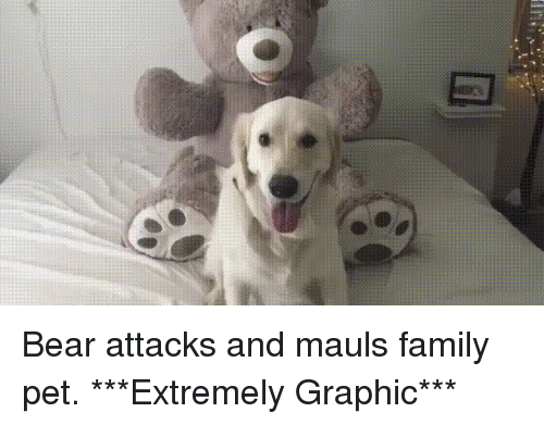 Family, Funny, and Bear: Bear attacks and mauls family pet. ***Extremely Graphic***
