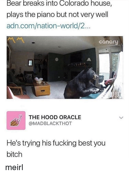 Bitch, Fucking, and The Hood: Bear  breaks  into  Colorado  house,  plays the piano but not very well  adn.com/nation-world/2...  canary  THE HOOD ORACLE  @MADBLACKTHOT  He's trying his fucking best you  bitch meirl