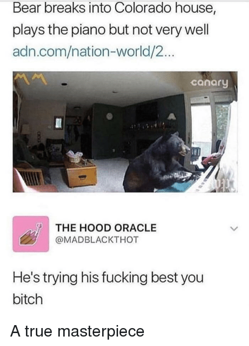 Bitch, Fucking, and The Hood: Bear breaks into Colorado house,  plays the piano but not very well  adn.com/nation-world/2...  conory  THE HOOD ORACLE  @MADBLACKTHOT  He's trying his fucking best you  bitch A true masterpiece