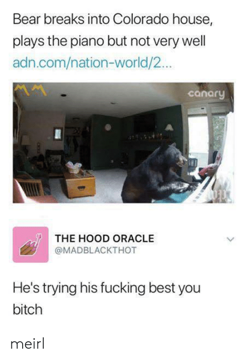 Bitch, Fucking, and The Hood: Bear breaks into Colorado house,  plays the piano but not very well  adn.com/nation-world/2...  canaru  THE HOOD ORACLE  @MADBLACKTHOT  He's trying his fucking best you  bitch meirl