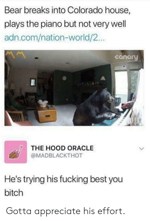 Bitch, Fucking, and The Hood: Bear breaks into Colorado house,  plays the piano but not very well  adn.com/nation-world/2..  canory  THE HOOD ORACLE  @MADBLACKTHOT  He's trying his fucking best you  bitch Gotta appreciate his effort.
