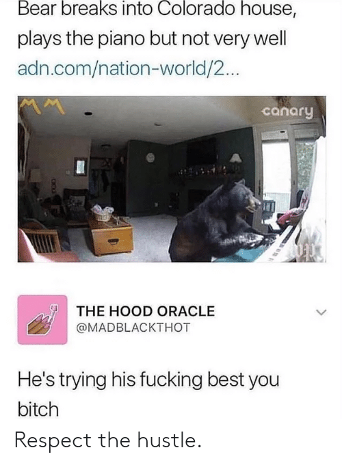Respect, The Hood, and Bear: Bear breaks into Colorado house,  plays the piano but not very well  adn.com/nation-world/2...  canary  THE HOOD ORACLE  @MADBLACKTHOT  He's trying his fucking best you  bitch Respect the hustle.