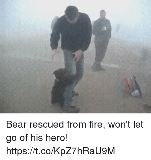 Fire, Bear, and Girl Memes: Bear rescued from fire, won't let go of his hero! https://t.co/KpZ7hRaU9M