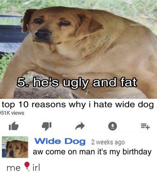 Birthday, Fat, and Aw Come On: bearboo  5, he's ualv and fat  top 10 reasons why i hate wide dog  51K views  Wide Dog 2 weeks ago  aw come on man it's my birthday me🎈irl