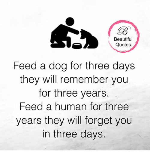 Beautiful Quotes Feed A Dog For Three Days They Will Remember You