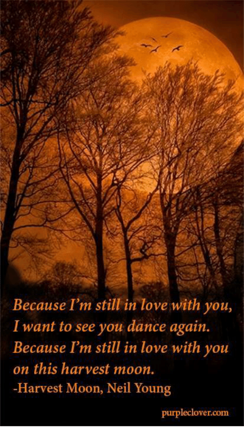 Because I'm Still In Love With You I Want To See You Dance Again Adorable I M Still In Love With You Quotes