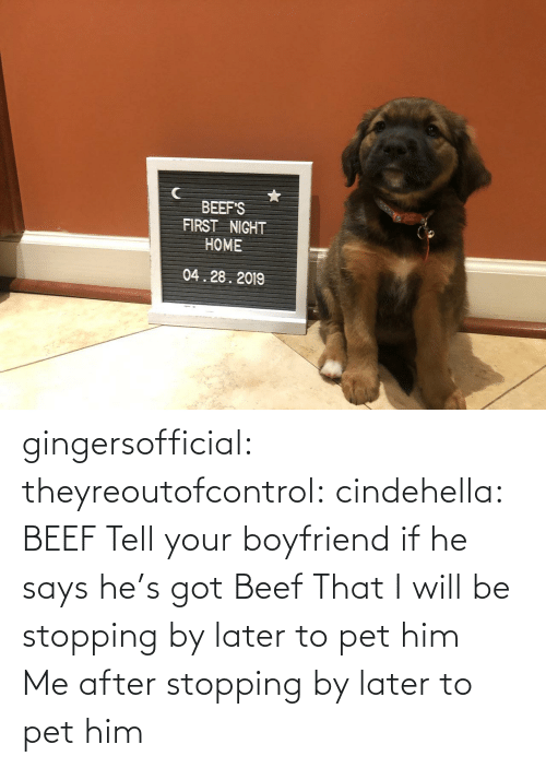 Beef, Gif, and Tumblr: BEEF'S  FIRST NIGHT  HOME  04.28.2019 gingersofficial:  theyreoutofcontrol:  cindehella: BEEF Tell your boyfriend if he says he's got Beef That I will be stopping by later to pet him    Me after stopping by later to pet him