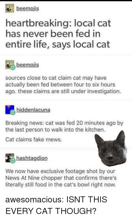 Cats, Fake, and Food: beemojis  heartbreaking: local cat  has never been fed in  entire life, says local cat  beemojis  sources close to cat claim cat may have  actually been fed between four to six hours  ago. these claims are still under investigation  hiddenlacuna  Breaking news: cat was fed 20 minutes ago by  the last person to walk into the kitchen.  Cat claims fake mews.  hashtagdion  We now have exclusive footage shot by our  News At Nine chopper that confirms there's  literally still food in the cat's bowl right now. awesomacious:  ISNT THIS EVERY CAT THOUGH?