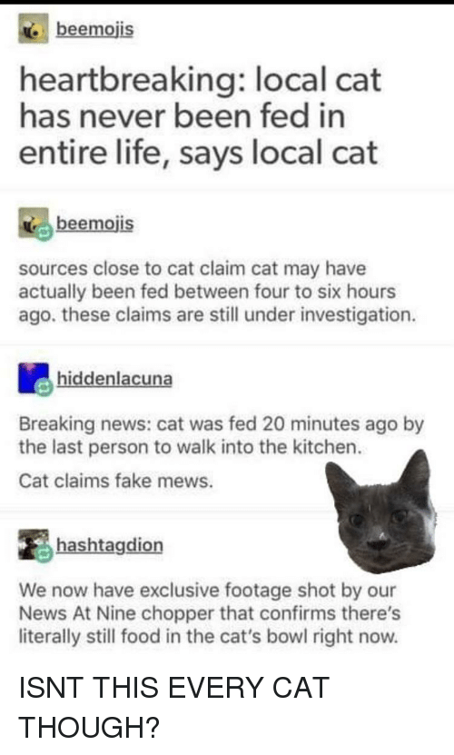 Cats, Fake, and Food: beemojis  heartbreaking: local cat  has never been fed in  entire life, says local cat  beemojis  sources close to cat claim cat may have  actually been fed between four to six hours  ago. these claims are still under investigation  hiddenlacuna  Breaking news: cat was fed 20 minutes ago by  the last person to walk into the kitchen.  Cat claims fake mews.  hashtagdion  We now have exclusive footage shot by our  News At Nine chopper that confirms there's  literally still food in the cat's bowl right now. ISNT THIS EVERY CAT THOUGH?
