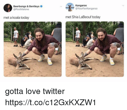 Love, Shia LaBeouf, and Twitter: Beerbongs & Bentleys  @PostMalone  Kangaroo  @YourFavKangaroo  met a koala today  met Shia LaBeouf today gotta love twitter https://t.co/c12GxKXZW1