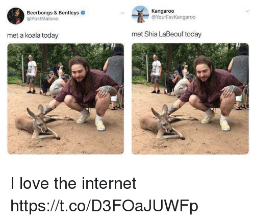 Internet, Love, and Shia LaBeouf: Beerbongs & Bentleys  @PostMalone  Kangaroo  @YourFavKangaroo  met a koala today  met Shia LaBeouf today I love the internet https://t.co/D3FOaJUWFp