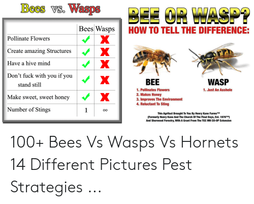 Bees vs Wasps BEE CR WASP? Bees Wasps X HOW TO TELL THE DIFFERENCE