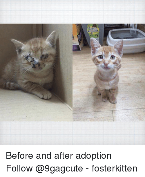 Memes, 🤖, and  Follow: Before and after adoption Follow @9gagcute - fosterkitten
