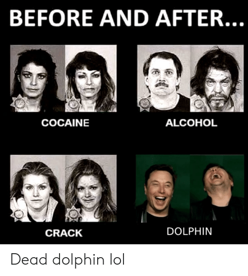 BEFORE AND AFTER COCAINE ALCOHOL CRACK DOLPHIN Dead Dolphin Lol