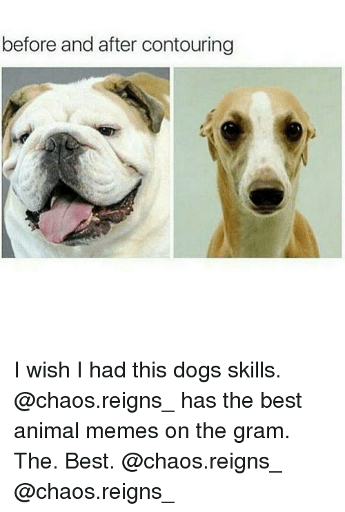 Memes, 🤖, and The Best: before and after contouring I wish I had this dogs skills. @chaos.reigns_ has the best animal memes on the gram. The. Best. @chaos.reigns_ @chaos.reigns_