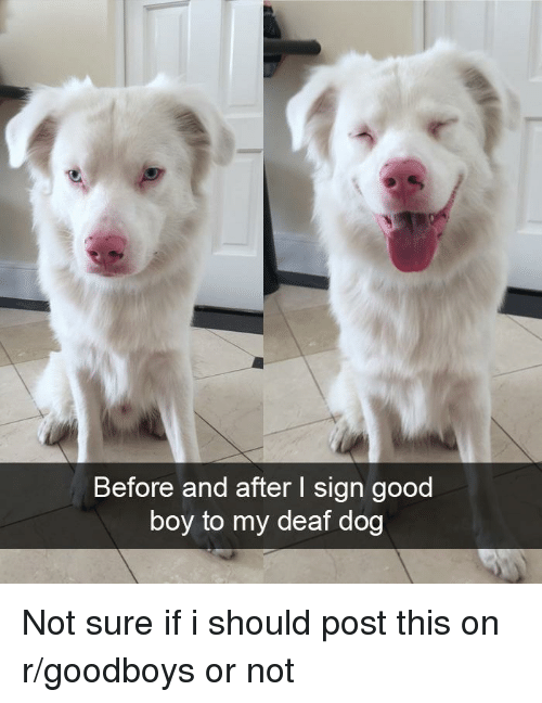 Good, Boy, and Dog: Before and after I sign good  boy to my deaf dog Not sure if i should post this on r/goodboys or not