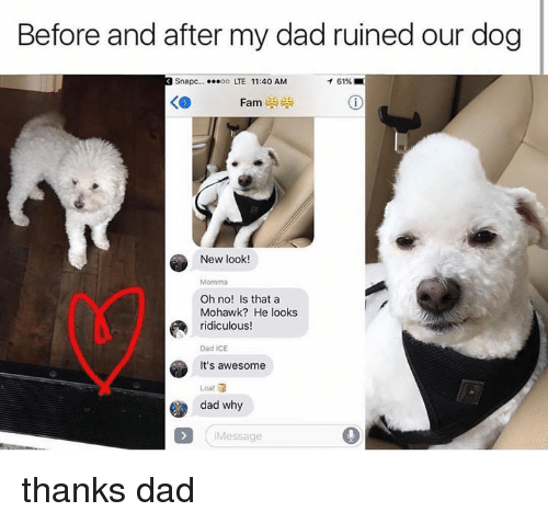 Dad, Memes, and Awesome: Before and after my dad ruined our dog  Snapc....00 LTE 11:40 AM  イ61% ■  KO  New look!  Momma  Oh no! Is that a  Mohawk? He looks  ridiculous!  Dad ICE  It's awesome  Loat  dad why  Message thanks dad