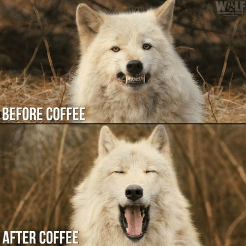 Before Coffee After Coffee Meme On Me Me