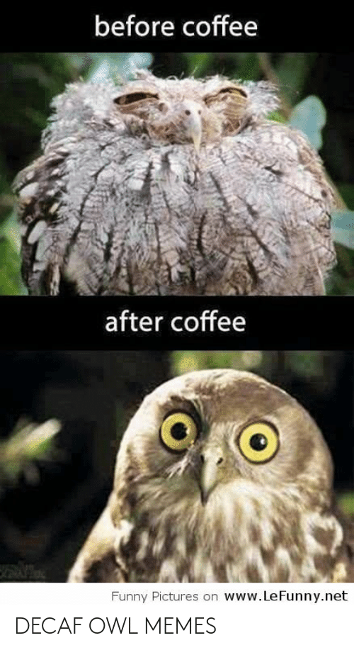 Before Coffee After Coffee Wwwlefunnynet Funny Pictures On Decaf Owl Memes Funny Meme On Me Me