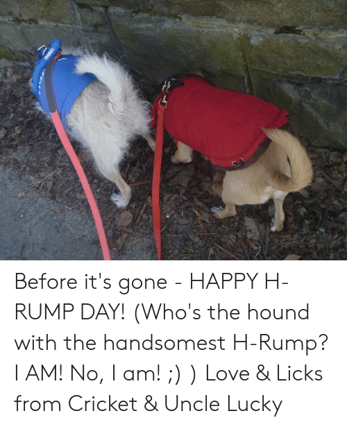 Love, Memes, and The Hound: Before it's gone - HAPPY H-RUMP DAY!  (Who's the hound with the handsomest H-Rump?  I AM!  No, I am! ;) ) Love & Licks from Cricket & Uncle Lucky