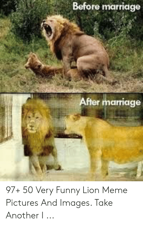Before Marriage After Marriage 97 50 Very Funny Lion Meme Pictures And Images Take Another I Funny Meme On Me Me