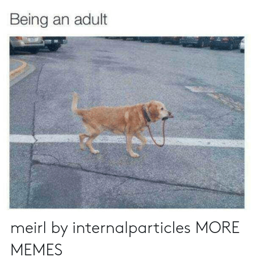 Being an Adult, Dank, and Memes: Being an adult meirl by internalparticles MORE MEMES