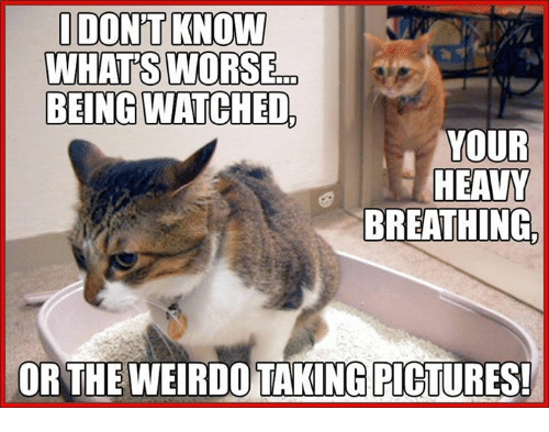 being watched your heavy breathing or the weirdo taking pictures 27436374 ✅ 25 best memes about weirdos weirdos memes,Weirdo Memes