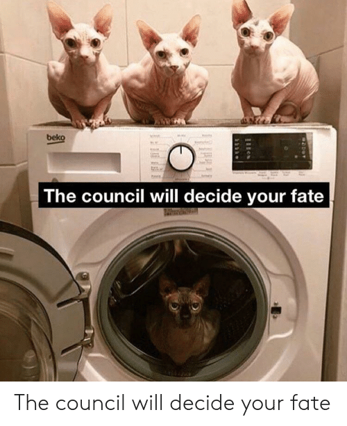 Beko The Council Will Decide Your Fate À§§ The Council Will Decide Your Fate Fate Meme On Me Me See a recent post on tumblr from @pebblepatch about the council will decide your fate. meme