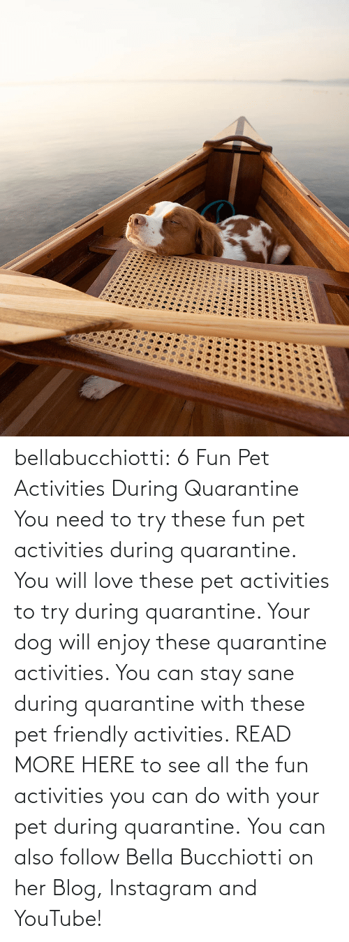 Instagram, Love, and Tumblr: bellabucchiotti:  6 Fun Pet Activities During Quarantine    You need to try  these fun pet activities during quarantine. You will love these pet  activities to try during quarantine. Your dog will enjoy these  quarantine activities. You can stay sane during quarantine with these  pet friendly activities.   READ MORE HERE to see all the fun activities you can do with your pet during quarantine.  You can also follow Bella Bucchiotti on her Blog, Instagram and YouTube!
