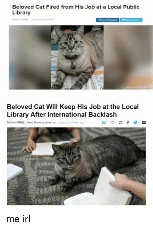 Beloved Cat Fired From His Job at a Local Public Library