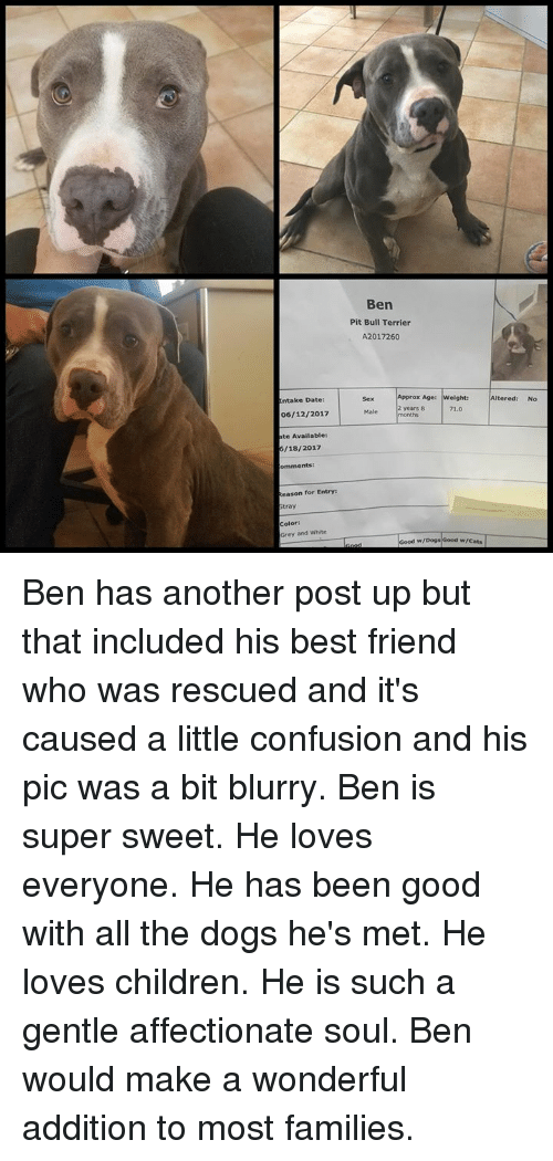 Ben Pit Bull Terrier A2017260 Age|weight |Altered Sex X Age