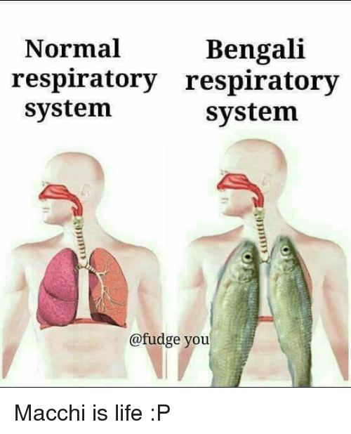 bengali normal respiratory respiratory system system fudge you macchi is 21251067 ✅ 25 best memes about respiratory system respiratory system memes