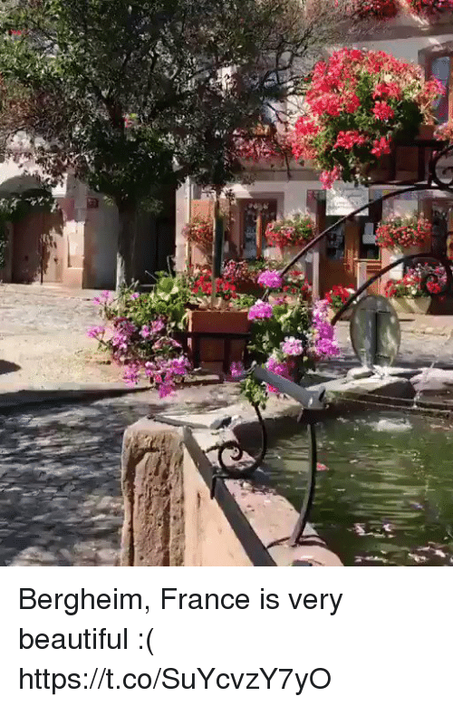 Beautiful, France, and Girl Memes: Bergheim, France is very beautiful :( https://t.co/SuYcvzY7yO