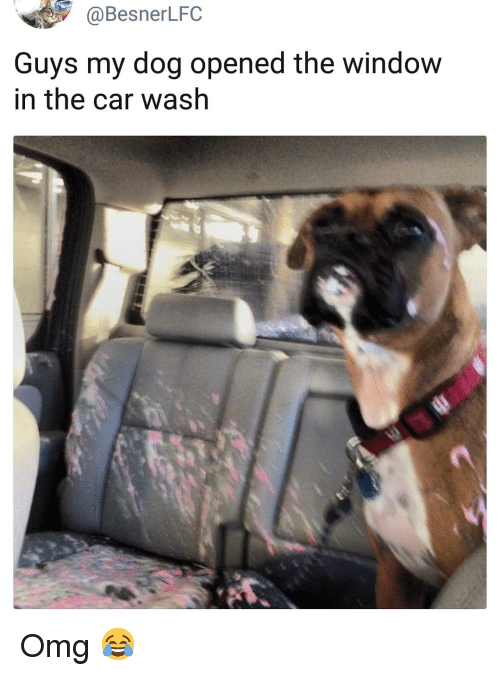 Memes, Omg, and 🤖: @BesnerLFC  Guys my dog opened the window  in the car wash Omg 😂